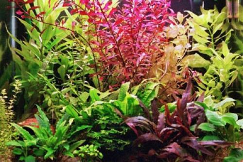 • Аквариумные растения