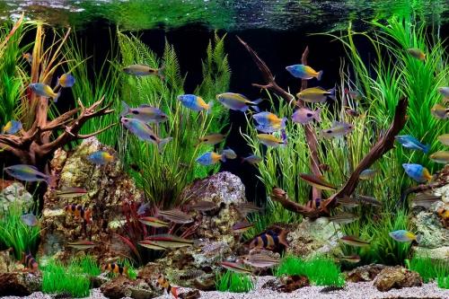 • Аквариумные рыбки